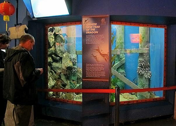 Seadragon exhibit at the Melbourne Aquarium.