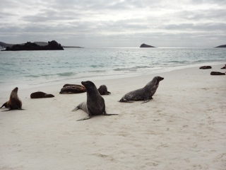 Sea Lions on the Galápagos Islands.