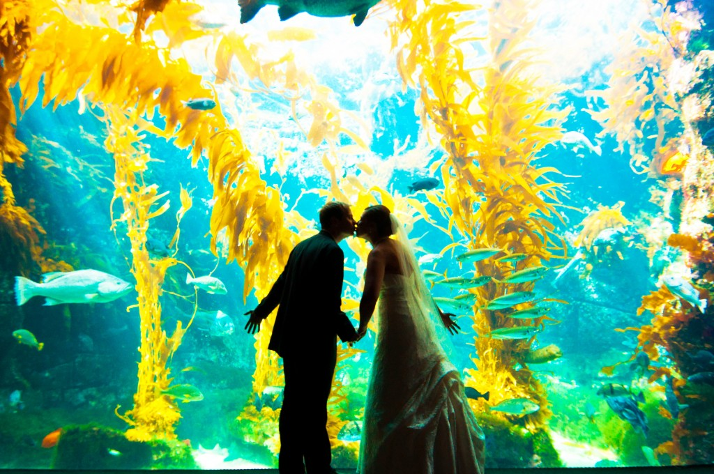 Birch Aquarium Wedding