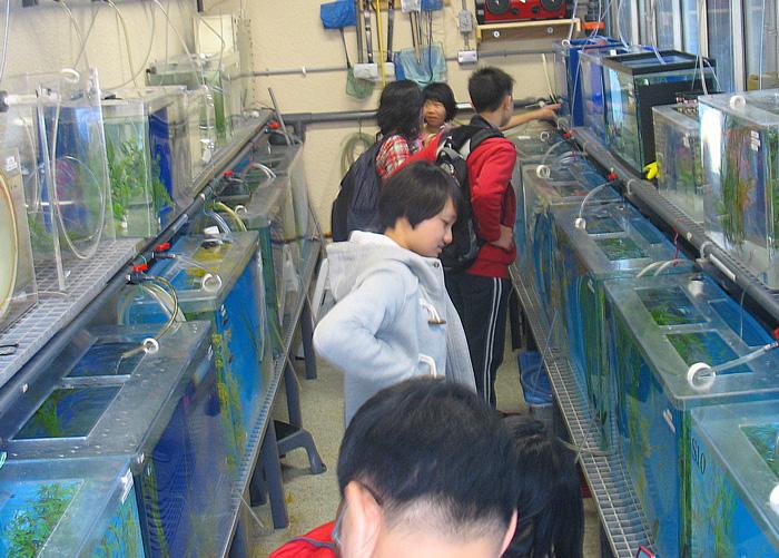 Seahorse Breeding Lab