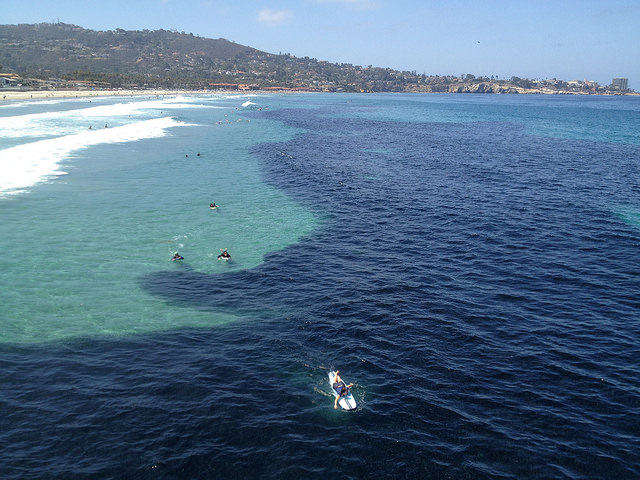 northern anchovy aggregation in La Jolla. July 8, 2014
