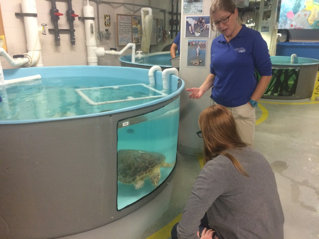 Birch Aquarium aquarist Kylie Washer and South Carolina Aquarium Sea Turtle Rescue program manager Kelly Thorvalson