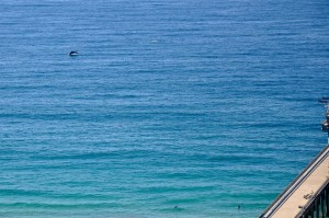 A False Killer Whale jumps out of the water near Scripps Pier.