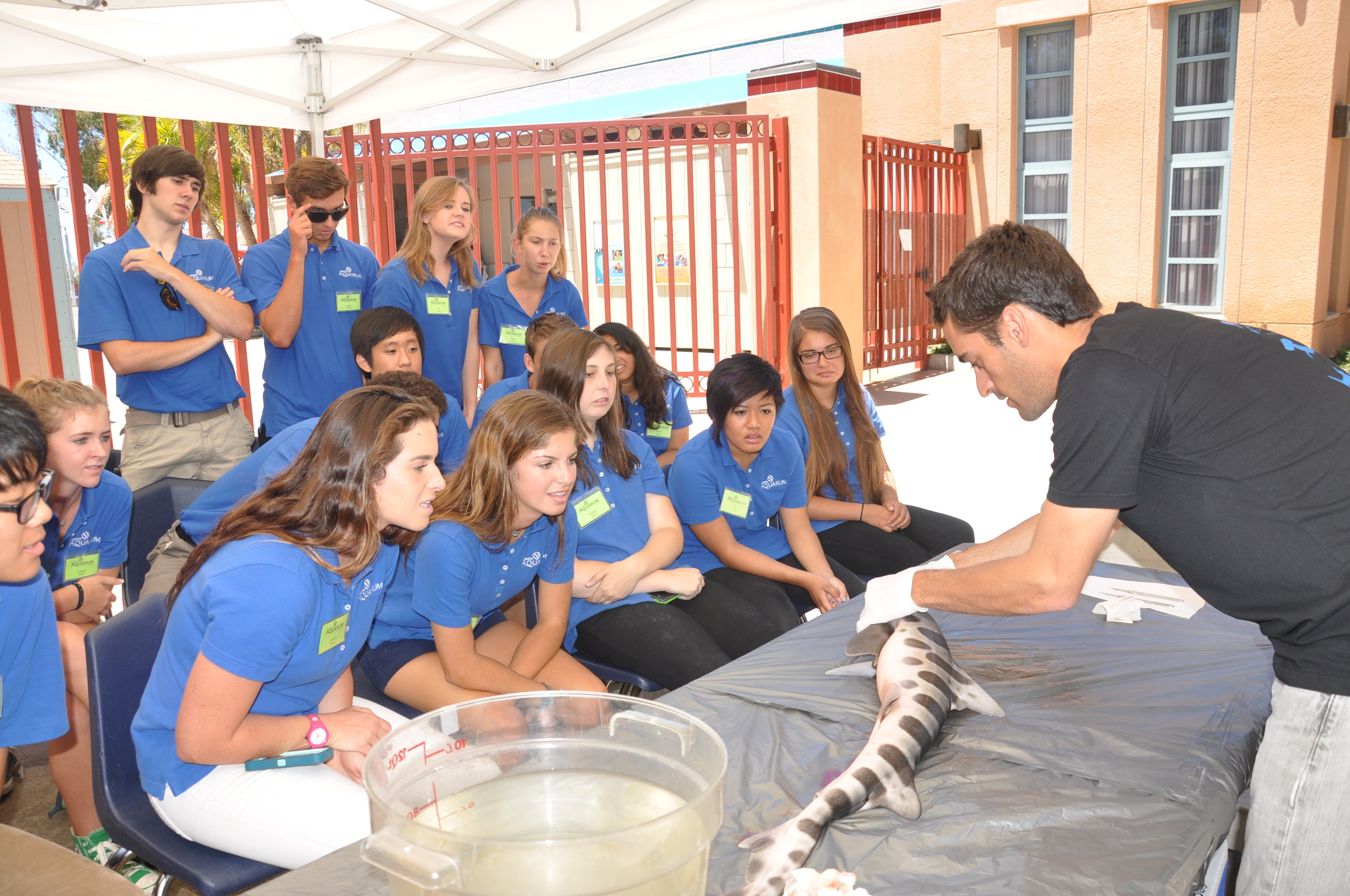 Youth Summer Interns learn about Leopard Shark anatomy and physiology from Scripps Institution of Oceanography 's Dr. Andy Nosal.