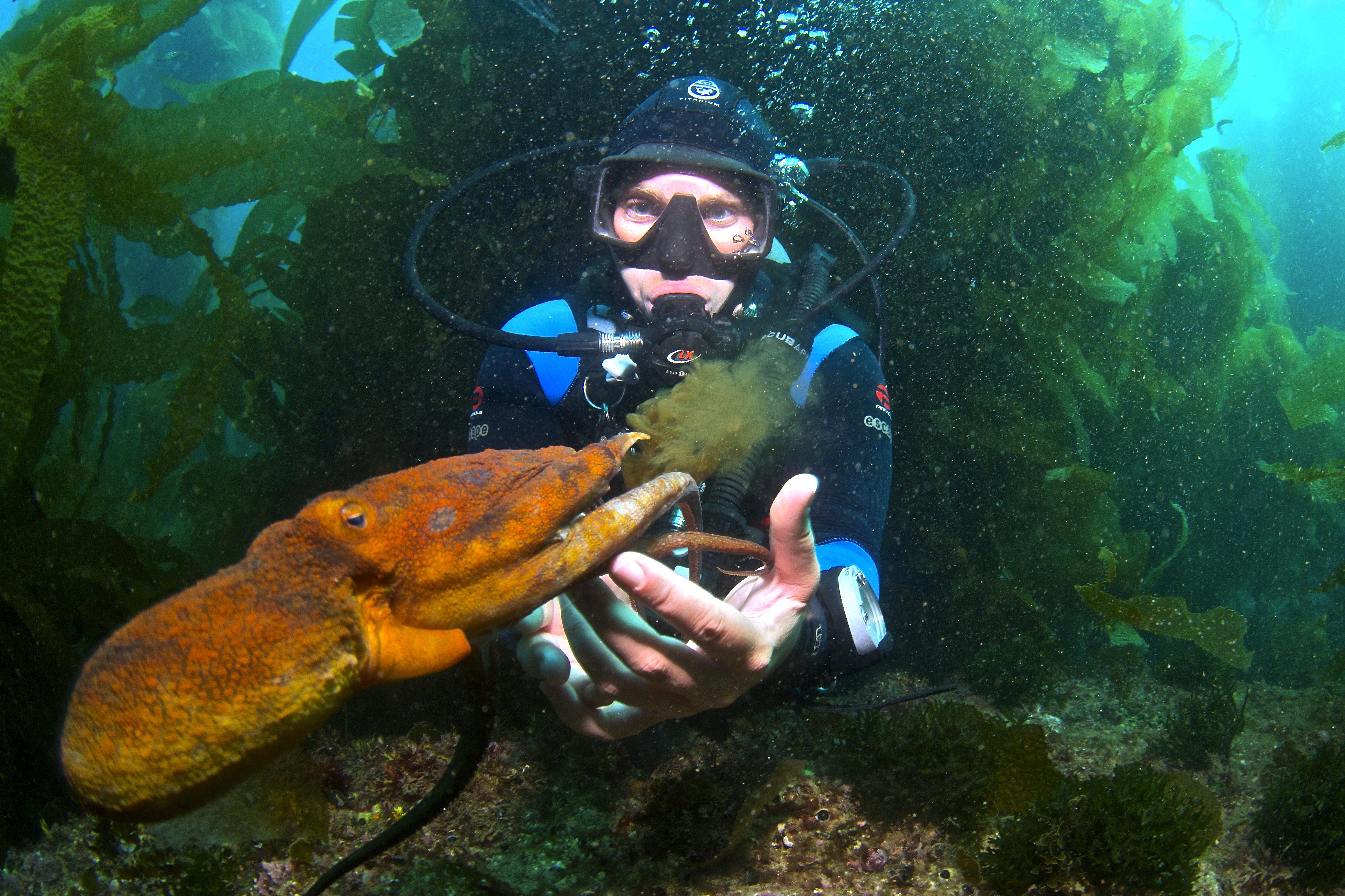 Marine scientist Jenny Hofmeister, Ph.D. studies Octopus behavior and ecology.