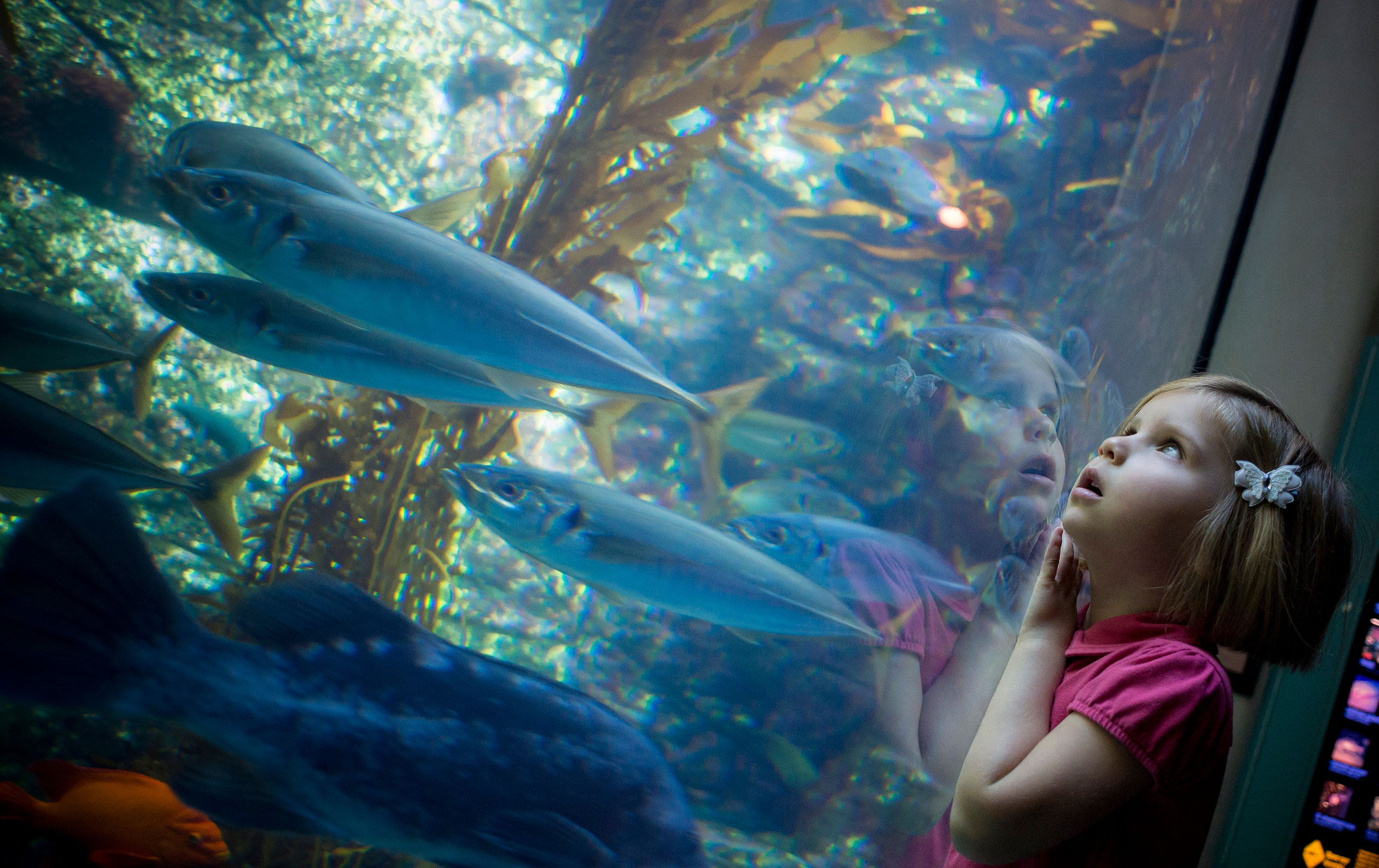 Birch Aquarium at Scripps | Home