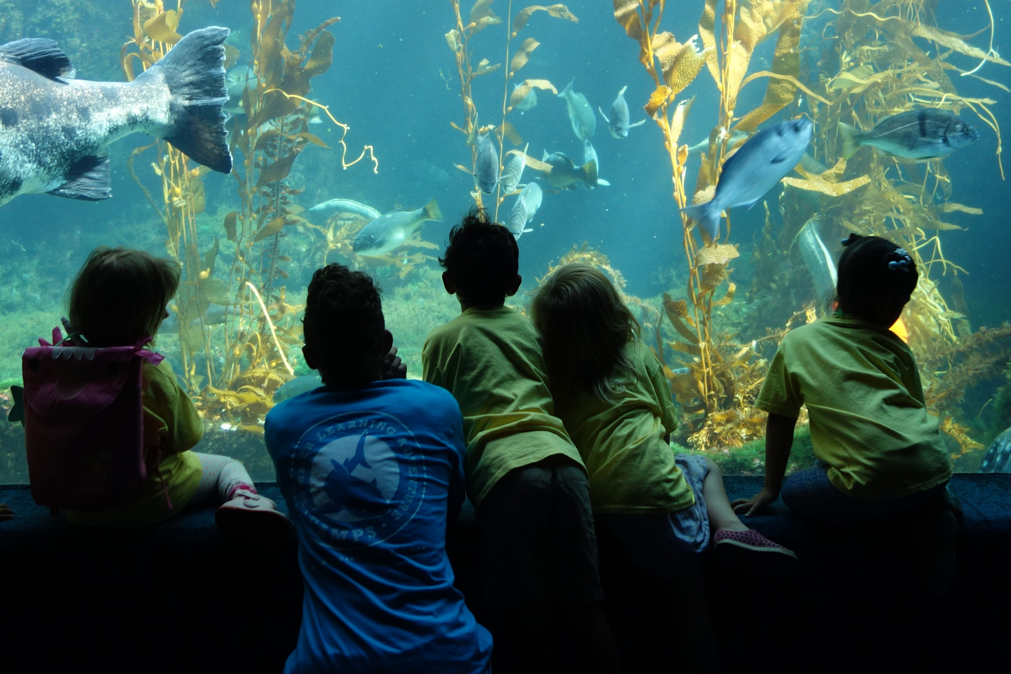 Children 39 S Birthday Parties Birch Aquarium At Scripps