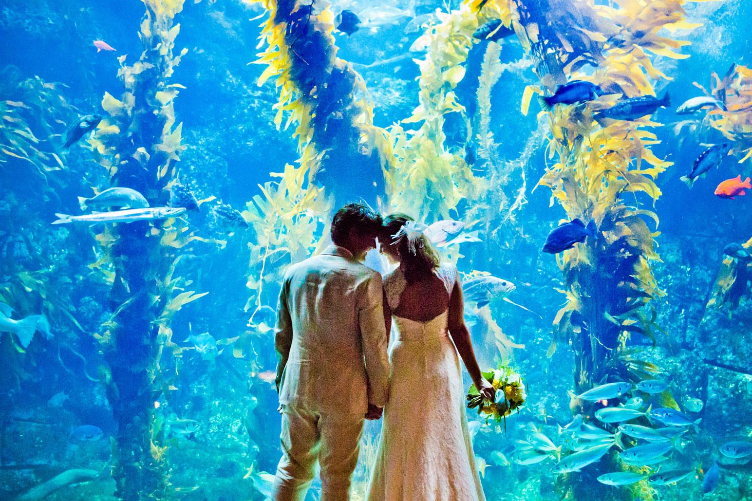 Weddings birch aquarium at scripps for Site aquarium