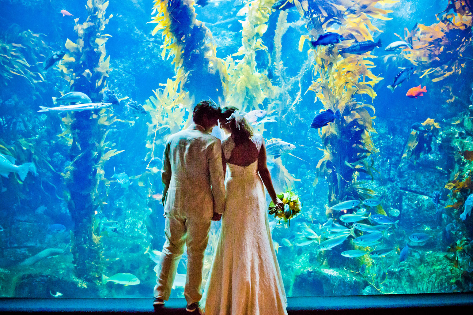 Birch aquarium at scripps home for Site aquarium