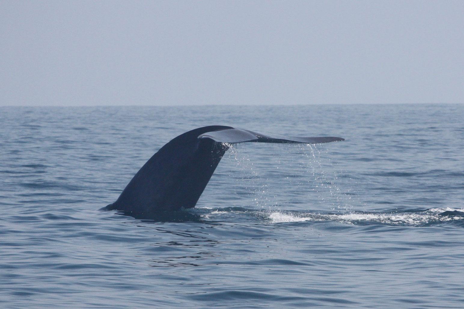 Whale And Wildlife Adventure Birch Aquarium At Scripps