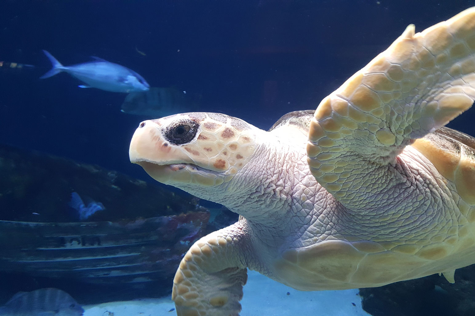 See a Sensational Sea Turtle