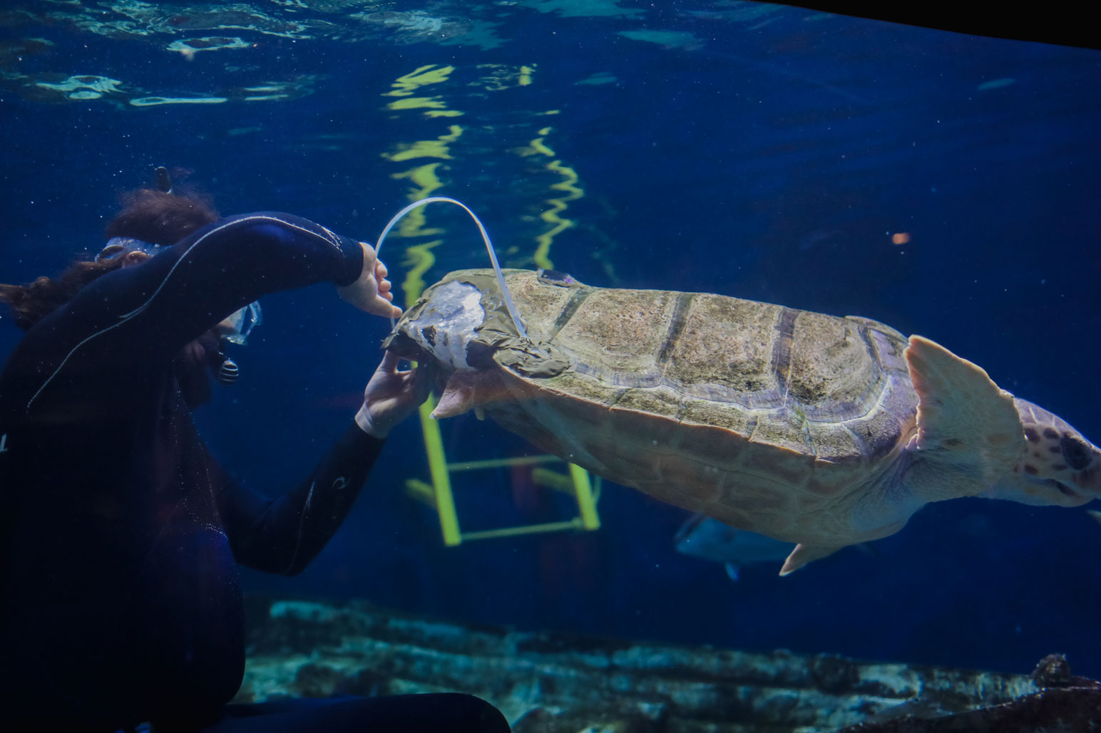 3-D Technology Helps Sea Turtle Thrive