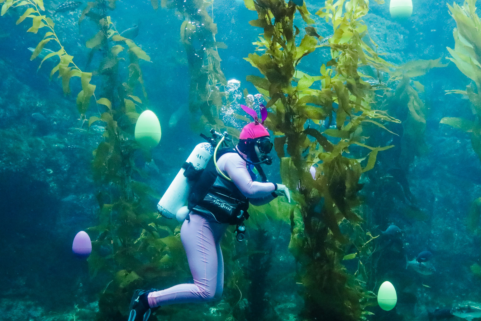 Scuba bunny dive show birch aquarium at scripps for Site aquarium