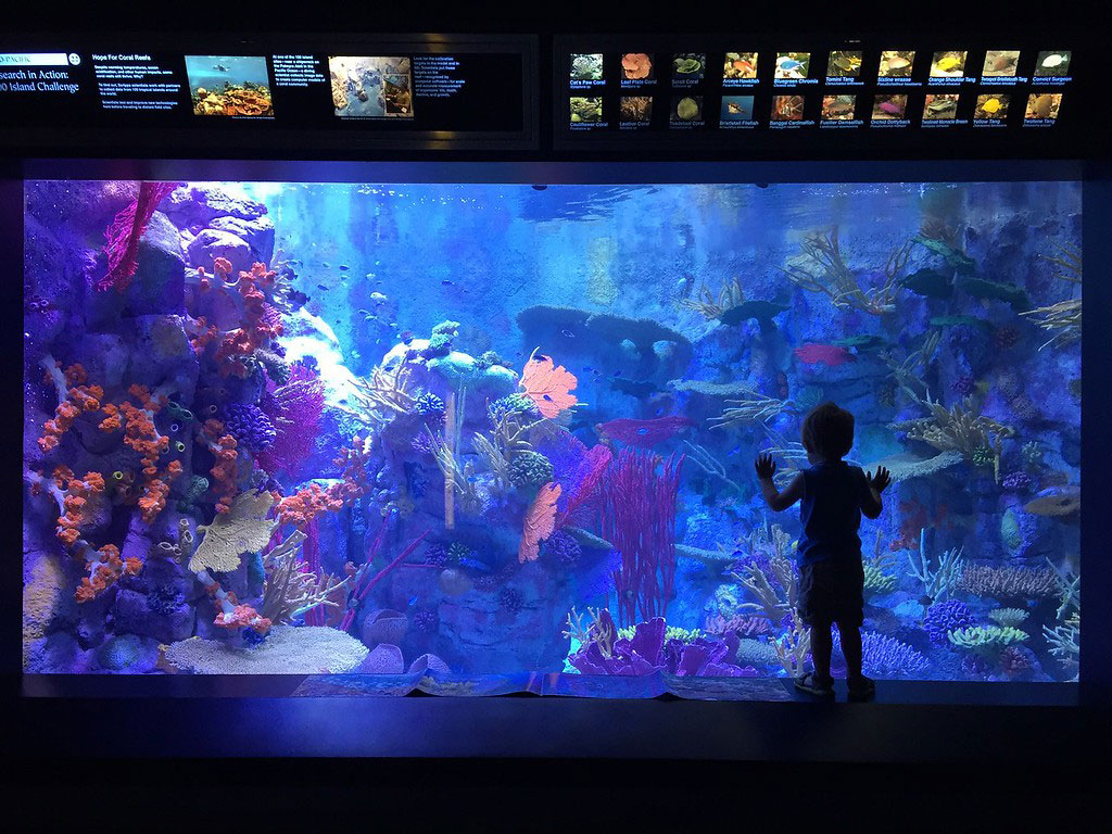 mission birch aquarium at scripps