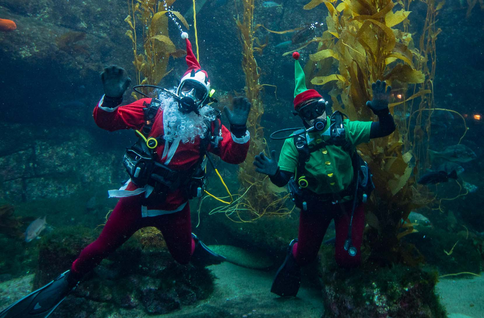 Seas 'n' Greetings — Dec. 1-31