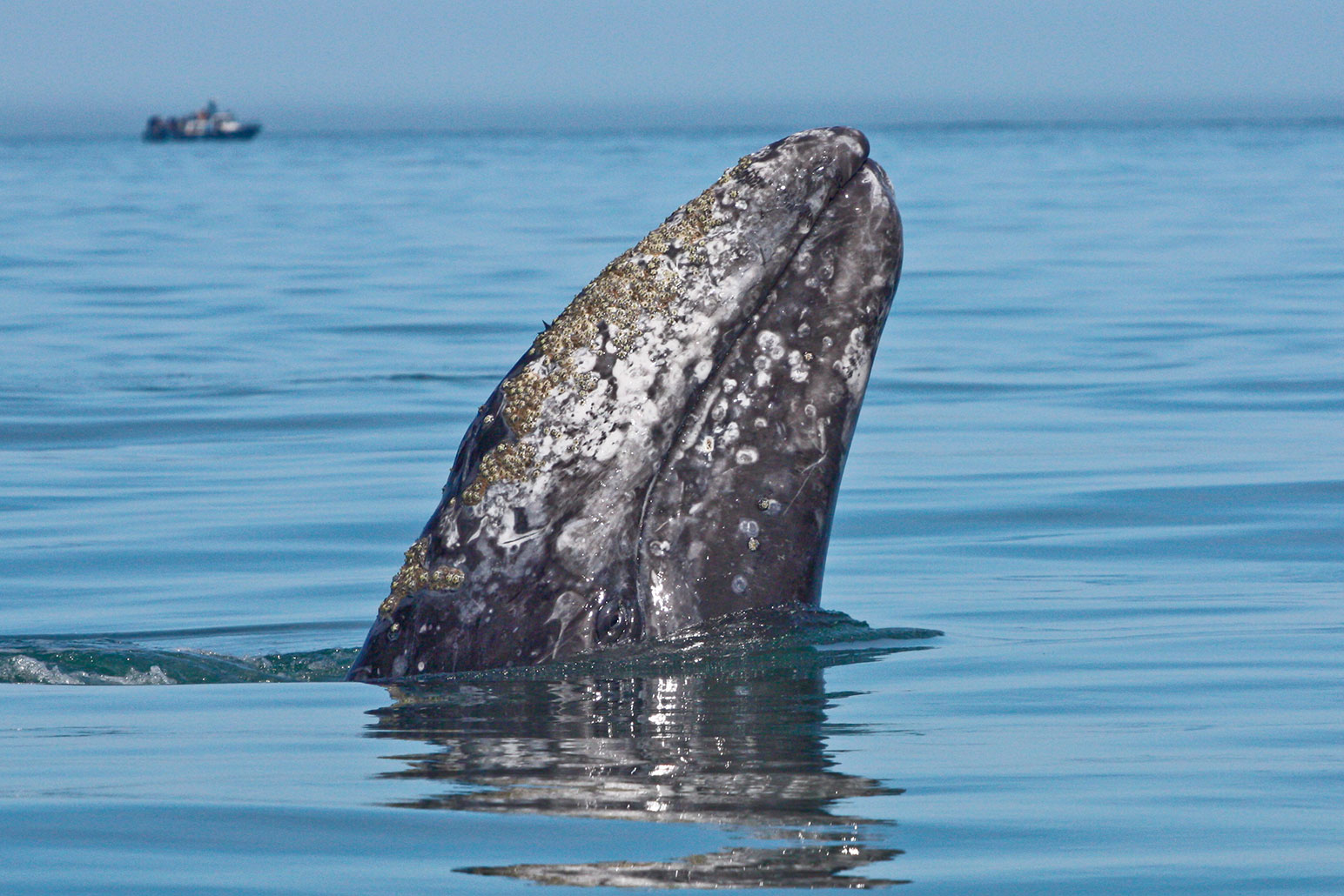 Whale Watching through April 14