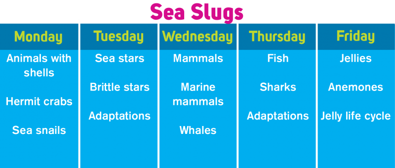 SeaSlugs.png
